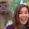 Babbuino palpa giornalista in diretta tv… E se la ride!! (VIDEO)