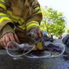 Video di vigile del fuoco che salva gattino da un incendio diventa virale in poche ore (VIDEO)
