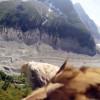 Il mondo dal punto di vista delle aquile (VIDEO)