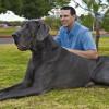 Morto il cane più grande del mondo, pesava 110 kg [FOTO]