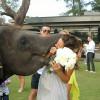 """""""Adesso puoi MANGIARE la sposa"""": elefante afferra sposa per la testa per mettersela in bocca [VIDEO]"""