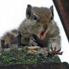 La disperazione dello scoiattolo quando gli scivola giù la noce che stava per mangiare [FOTO]
