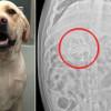 """""""Il cane mi ha mangiato i compiti"""": la bugia più assurda diventa realtà"""
