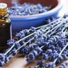 Olio essenziale di lavanda: un'essenza dalle grandiose proprietà terapeutiche e cosmetiche