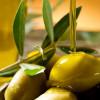 Olio extravergine d'oliva: il prezioso alleato quotidiano della nostra bellezza