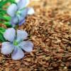 Semi di lino: gli straordinari poteri benefici e cosmetici di queste preziose perle di salute