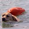 Storie di cani: Toby salva l'amico Lucky caduto in un fiume