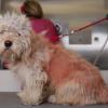 Il cane cambia look e trova subito casa [VIDEO]