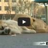 Cane dolcissimo, la compagna muore e lui non si arrende [VIDEO]