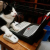 Gatti in ufficio: antistress e di compagnia