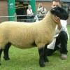 Inghilterra, la pecora ti porta la connessione