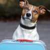 I 10 migliori Campeggi e Villaggi Pet Friendly