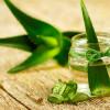 Aloe vera: usi e proprietà di una pianta portentosa