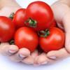 Fagioli e pomodori tipici della Toscana sono alleati anti-diabete