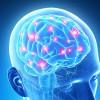 Maschi alfa si diventa: scoperto interruttore nel cervello
