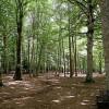 Salute: terme, forest therapy e cibo km zero per benessere psicofisico