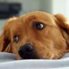 Anche i pet possono soffrire, ecco i campanelli d'allarme