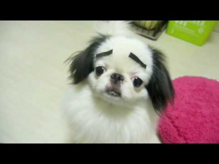 I cani con le sopracciglia [VIDEO]