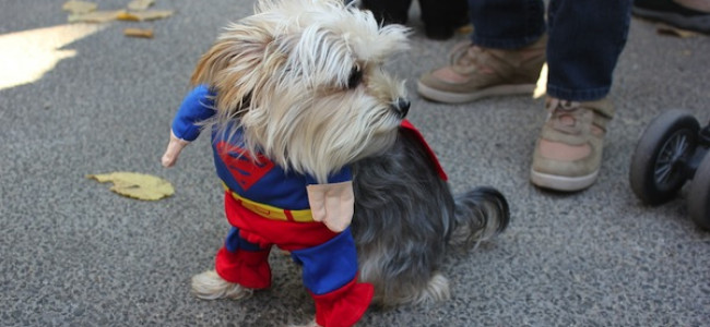 I cani in costume per la parata di Halloween a New York [FOTO]
