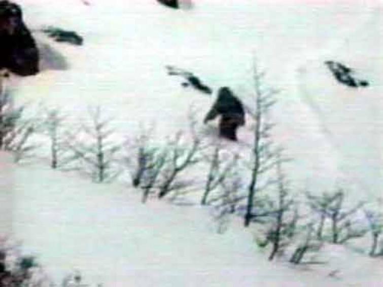 """Svelato il grande mistero dello Yeti, è solo un orso. Messner: """"Ve lo dico da decenni"""""""