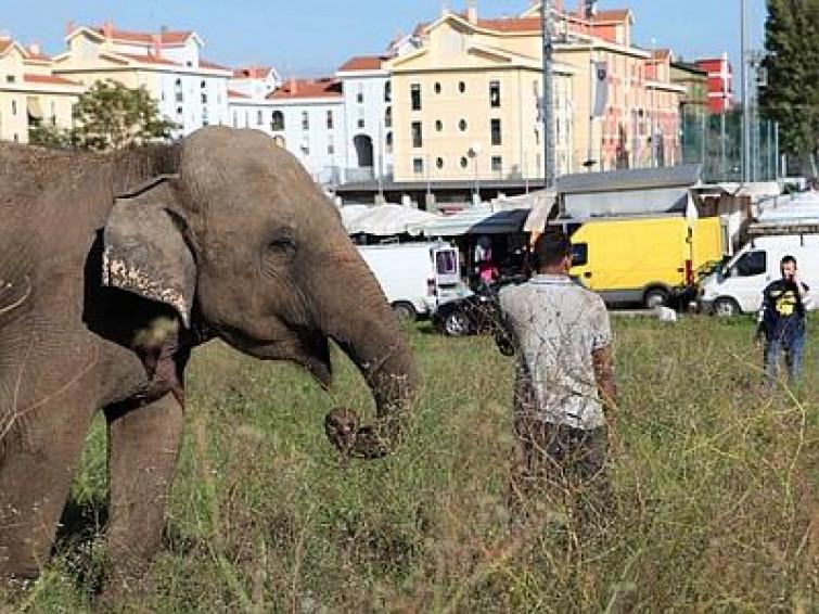 Roma: elefante scappa da circo, ritrovato al mercato [FOTO]