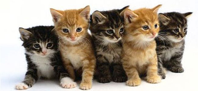 Liberati migliaia di gatti destinati ai ristoranti