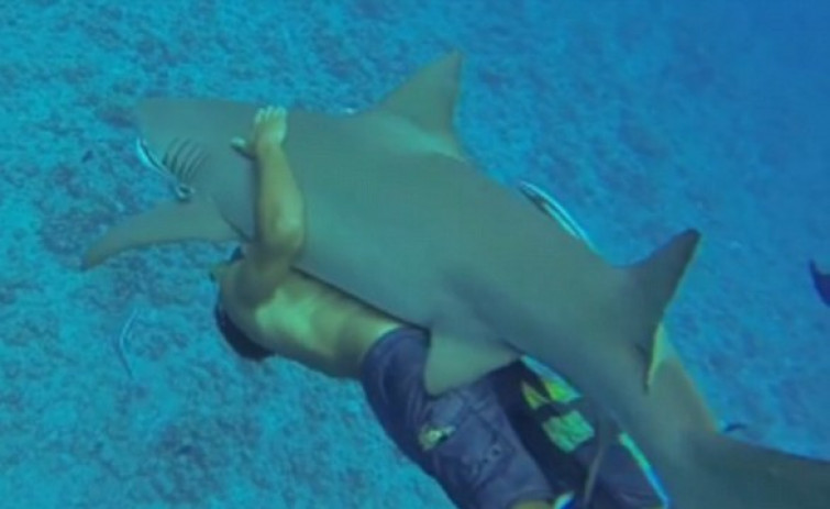 Turista incosciente abbraccia squalo mentre fa snorkeling [VIDEO]