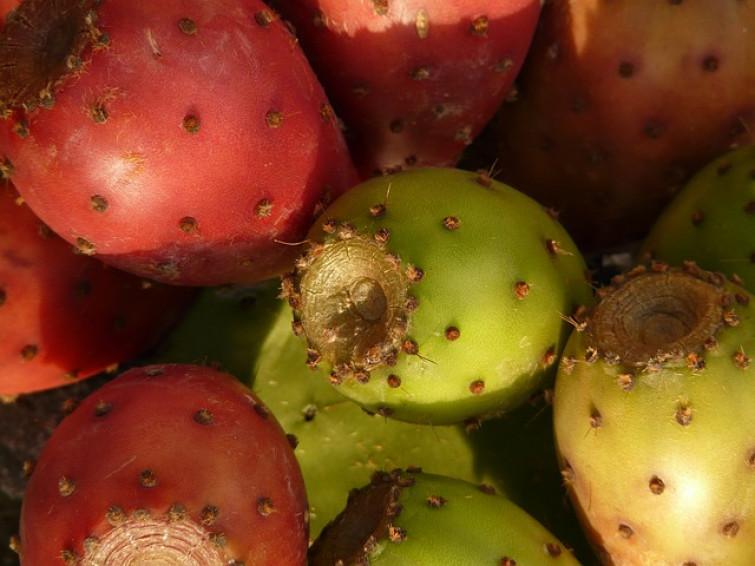 Fico d'India: un frutto coloratissimo, ricco di proprietà terapeutiche e cosmetiche