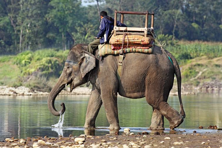 Elefanti troppo stressati, portati alla spa