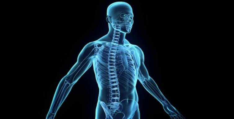 Google vuole mappare il corpo umano per sconfiggere le malattie