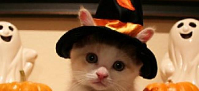 Halloween: travestimenti anche per i gatti [FOTO]