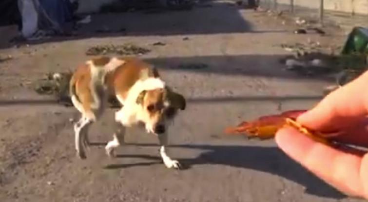 Cane abbandonato e investito: si rifugia nella spazzatura e viene salvato [VIDEO]