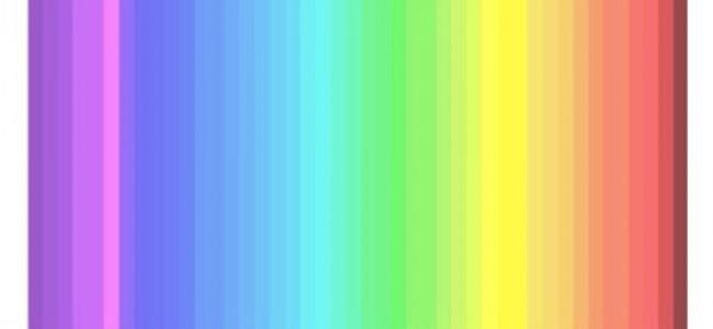 Test, quanti colori vedi? Scopri se vedi come un cane o come un'ape