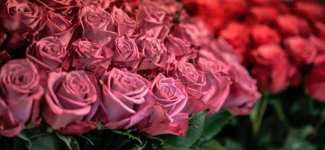 I fiori che si mangiano