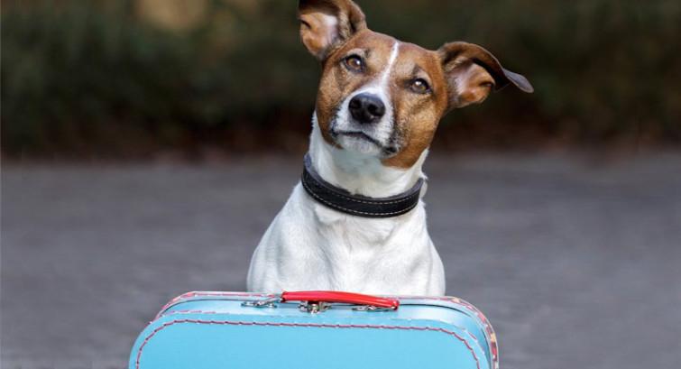 I 10 migliori Campeggi e Villaggi Pet Friendly