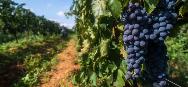 Sicilia: vitigni e ricette centenarie