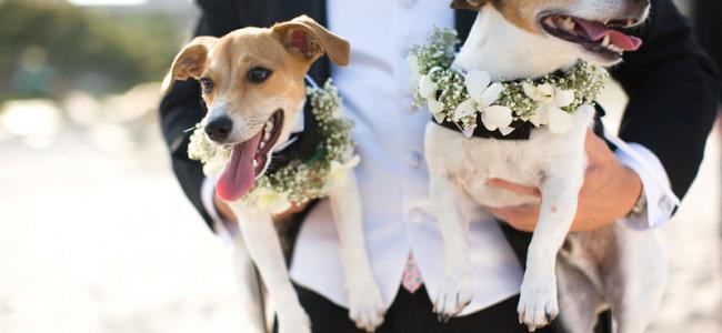 Wedding dog sitter, il servizio per avere con te il tuo amico a 4 zampe durante il tuo matrimonio