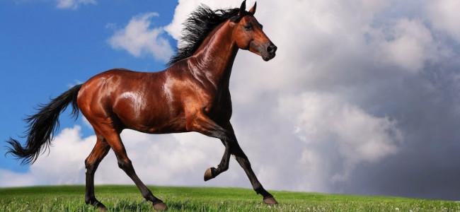I cavalli sanno riconoscersi allo specchio? Un nuovo studio risponde al quesito