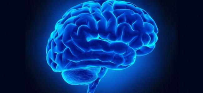 Ricerca: la gelosia non ha più segreti, mappata area nel cervello