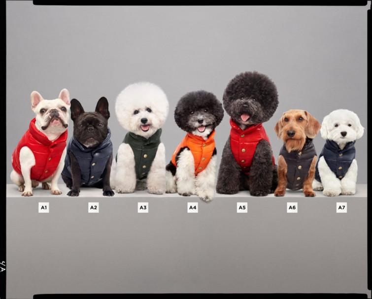 Da Moncler &Poldo Dog Couture nasce la capsule dedicata al miglior amico dell'uomo