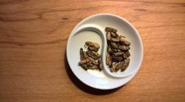 Gli italiani sono pronti a mangiare insetti?
