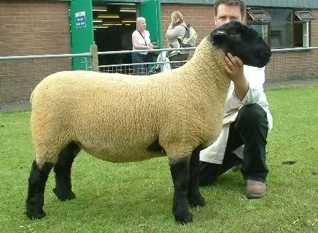 Inghilterra la pecora ti porta la connessione - La pagina della colorazione delle pecore smarrite ...
