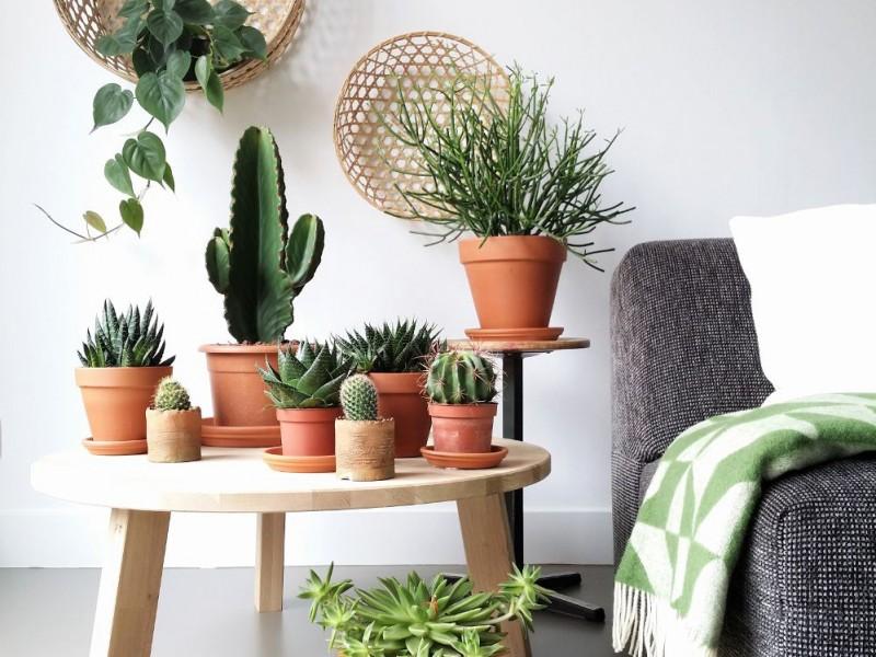 I cactus come coltivarli in casa for Tutte le piante grasse
